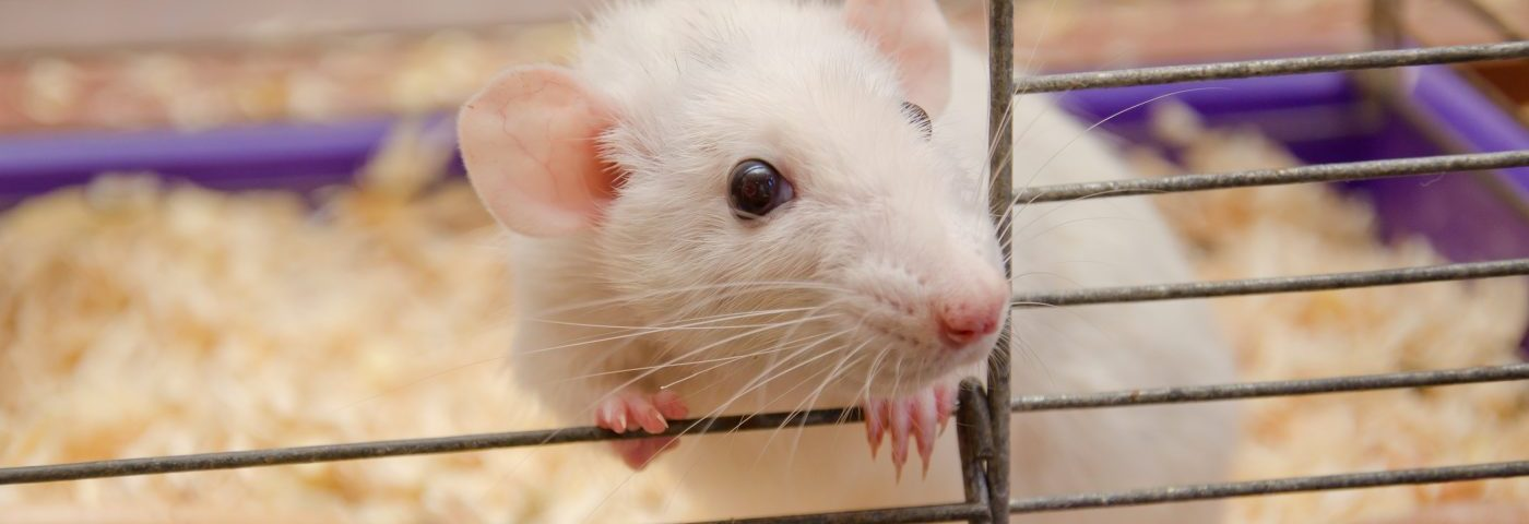 Inhibitor of Nogo-a Protein Improves Symptoms of Neuropsychiatric Lupus in Mice, Study Shows